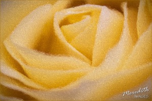 Yellow Rose - Pointillism I-Marble-web