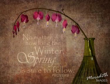 Bleeding Hearts - Spring Quote