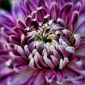 Purple Passion-center-spicify