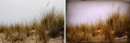 Dune Grass - web