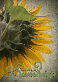 Sunflower - final - web