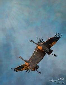 2-cranes-2-textures-light-leak
