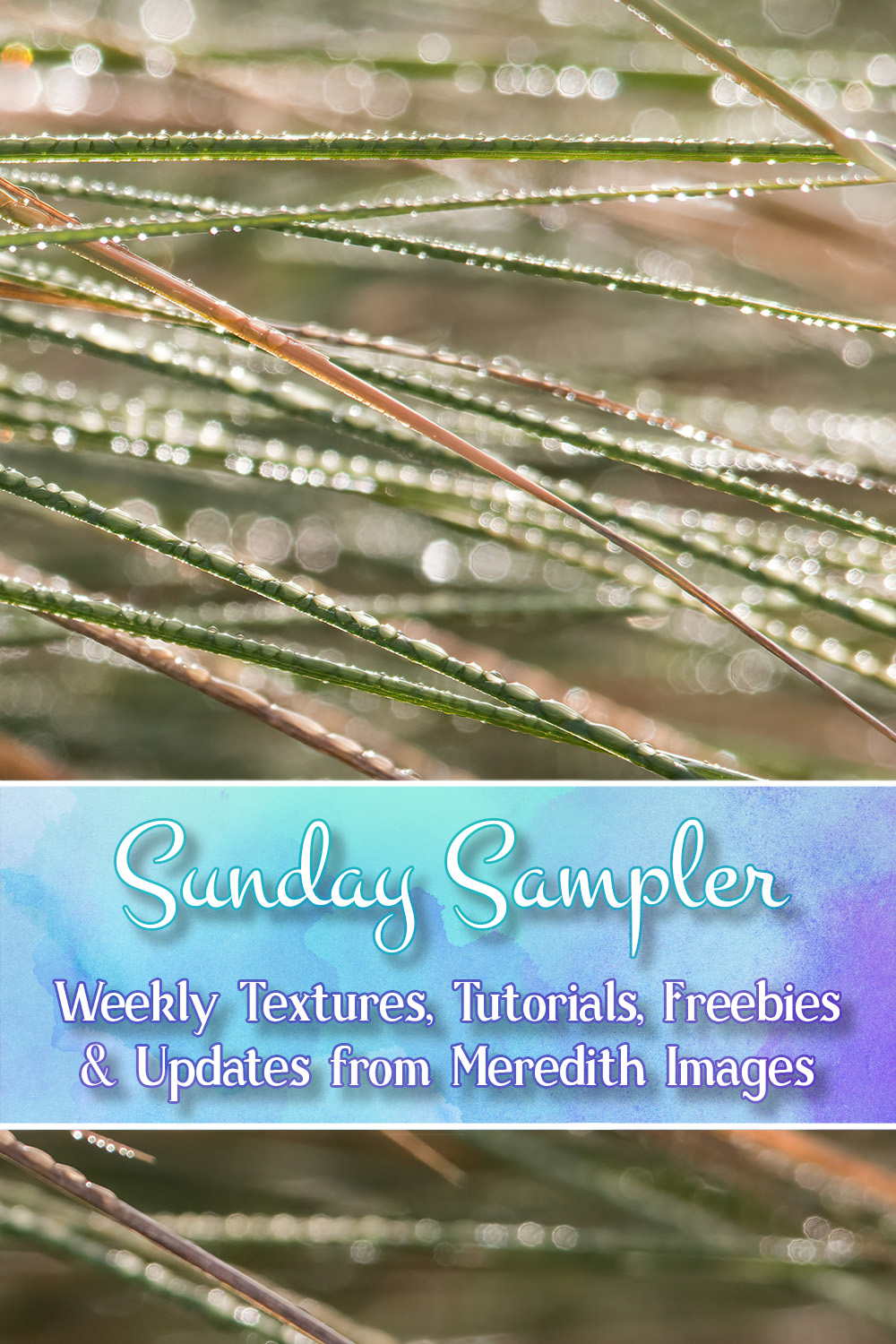 Feb. 17 – Sunday Sampler