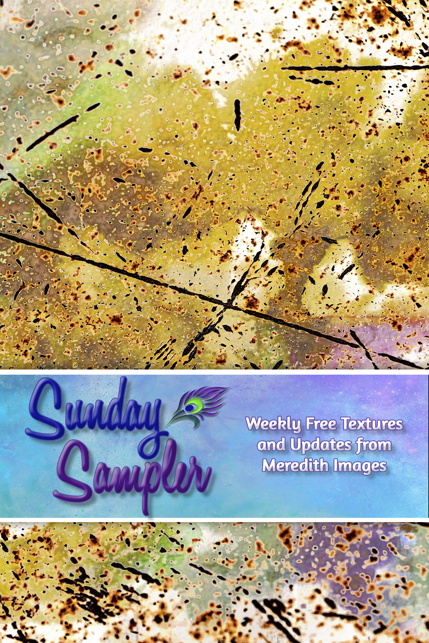 Sunday Sampler Jan. 24